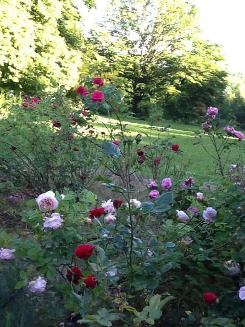 gardens_a_15.jpg