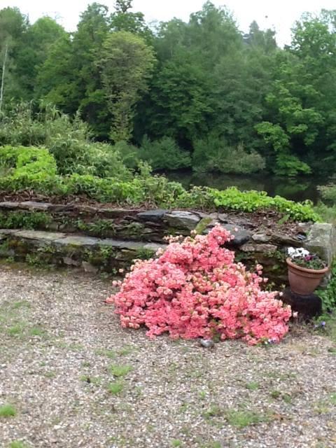 gardens_a_6.jpg